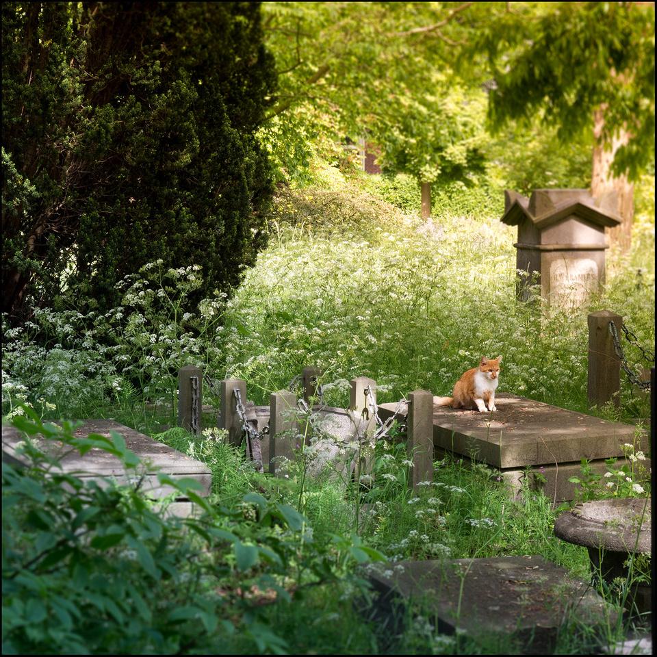 Old Graveyard - Gouda